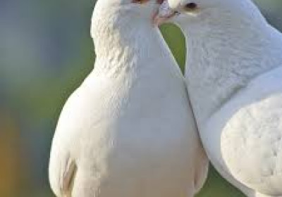 10 Proverbs for the Doves (& others) of this World