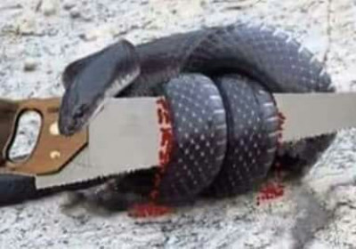 The Parable of a Snake & a Saw